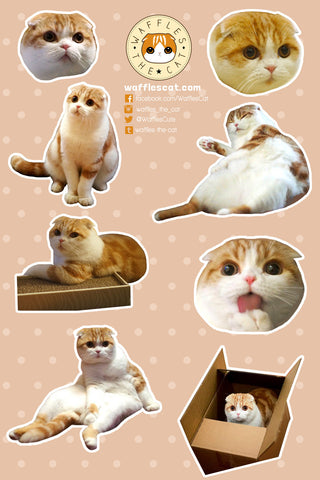 Scottish Fold Sticker Sheet | Cute Cat Stickers for Phone, Laptop, Journal
