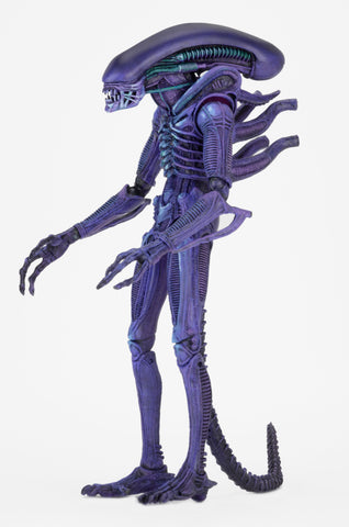 "NECA - Action Figures - NECA Club x Alien 2017 Exclusive – 7"" Scale Action Figure – Purple Warrior"