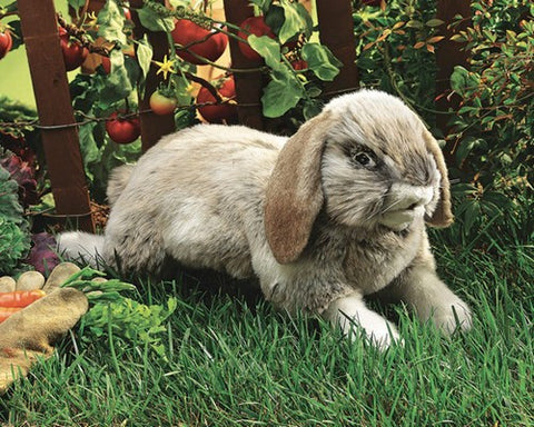 Folkmanis Rabbit, Holland Lop Hand Puppet - 2892 - Peazz Toys