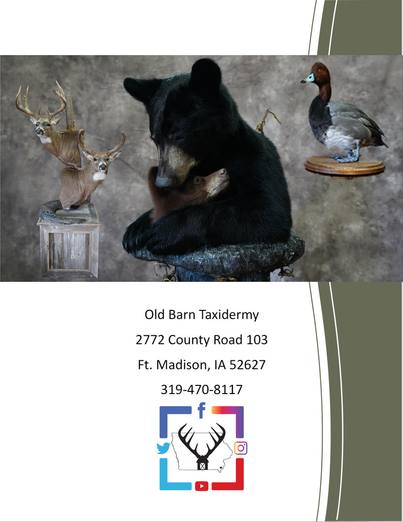 Old Barn Taxidermy Price List 2020 - Back Page