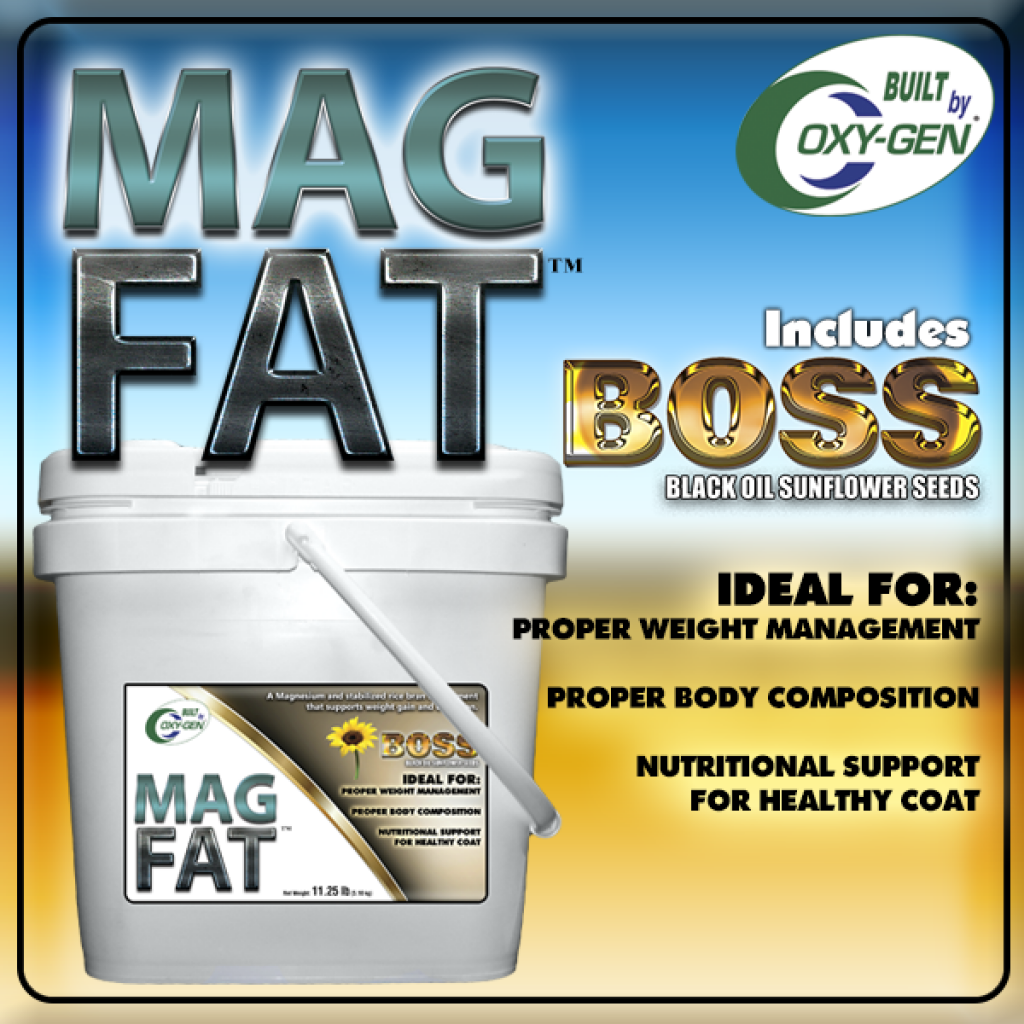 Mag-Fat with BOSS