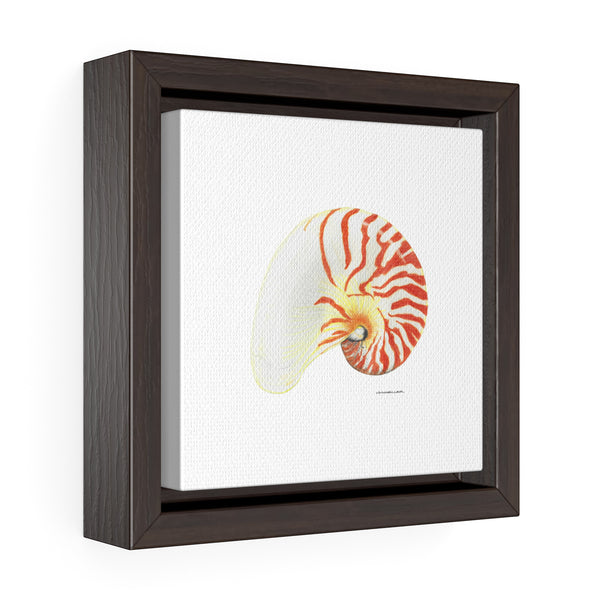 Canvas Wall Print - Nautilus Shell - Square Framed Premium Gallery Wrap Canvas - Falling Leaf Card Co.