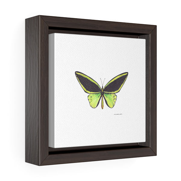 Canvas Wall Print - Green Butterfly - Square Framed Premium Gallery Wrap Canvas - Falling Leaf Card Co.