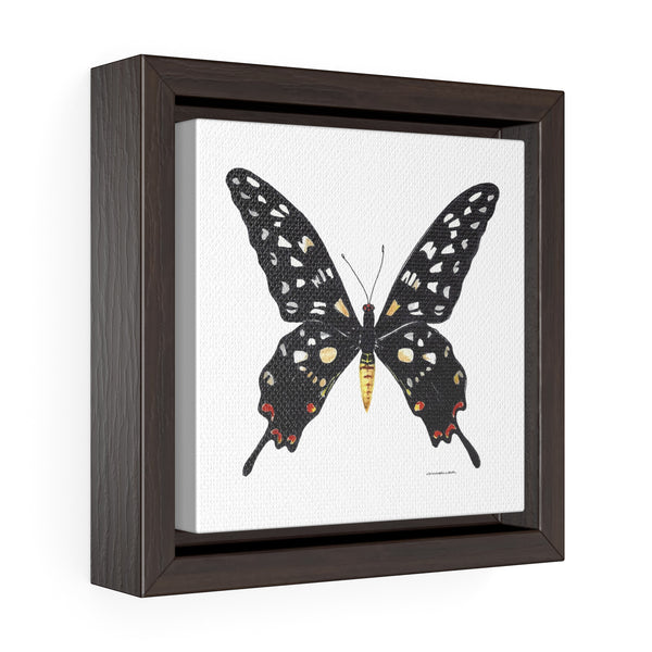 Canvas Wall Print - Giant Madagascar Butterfly - Square Framed Premium Gallery Wrap Canvas - Falling Leaf Card Co.