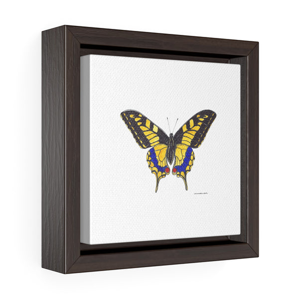 Canvas Wall Print - Yellow Swallow Tail Butterfly -  Square Framed Premium Gallery Wrap Canvas - Falling Leaf Card Co.