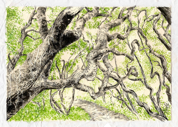 Winding Branches