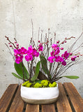 Hot Pink Beauty Orchid Plant