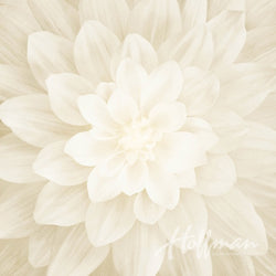 Dream Big Ivory Spectrum Panel P4389-22-Ivory