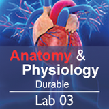 Anatomy & Physiology Lab 03: Homeostasis - Durable