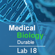 Medical Biology Lab 18: Genetic Variation, Mutations, and Disorders - Durable
