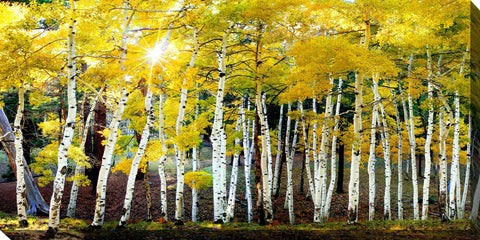 Sun on Aspens Outdoor Canvass Art - Outdoor Art Pros