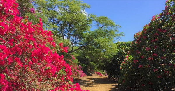Koko Crater Botanical Garden - Surround Yourself in Many Floras, Cacti and Feathers
