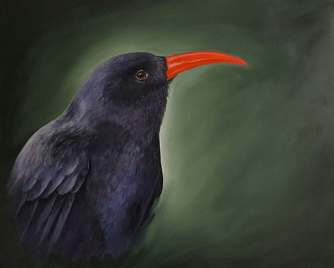limited_edition_print_chough_cornwall