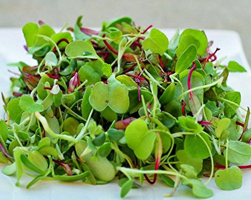 Certified Non-GMO Microgreens Seeds - Spicy Lettuce Mix - For Sprouting (2oz (40000 seeds))