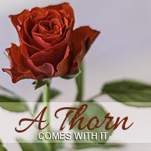 A Thorn Comes With it