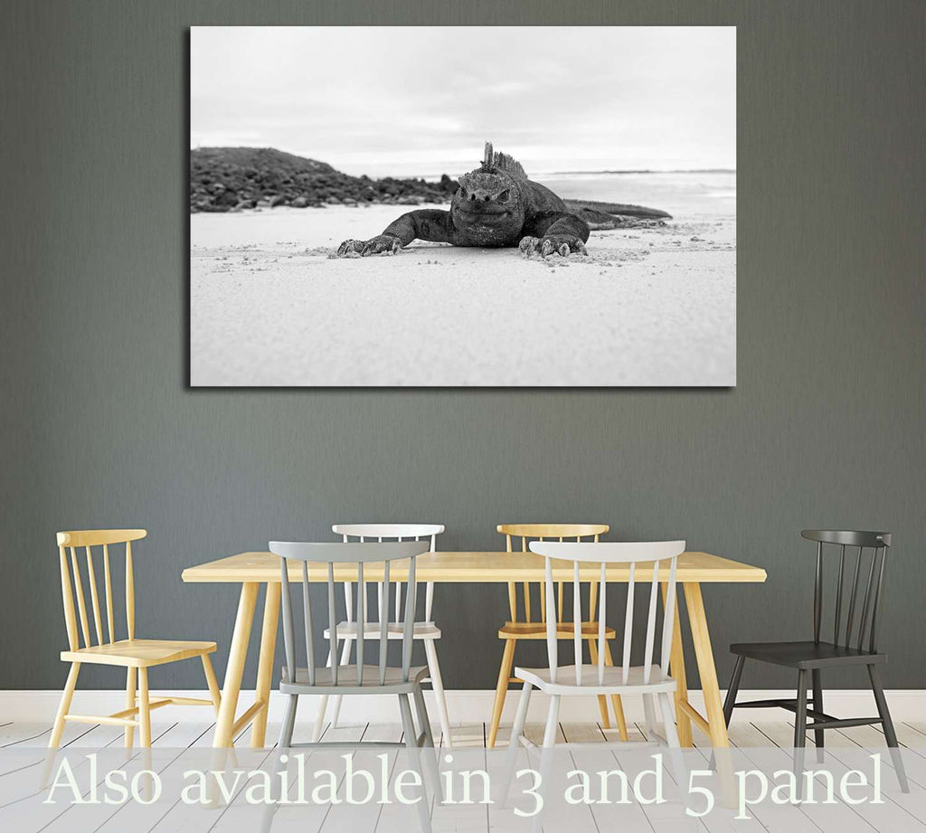 A marine iguana walking on the beach on Galapagos №3258 Ready to Hang Canvas Print