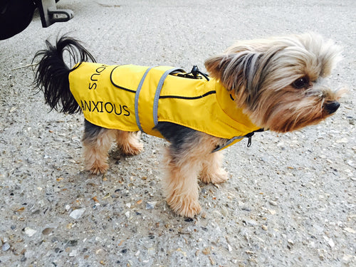 My Anxious dog Raincoat 10