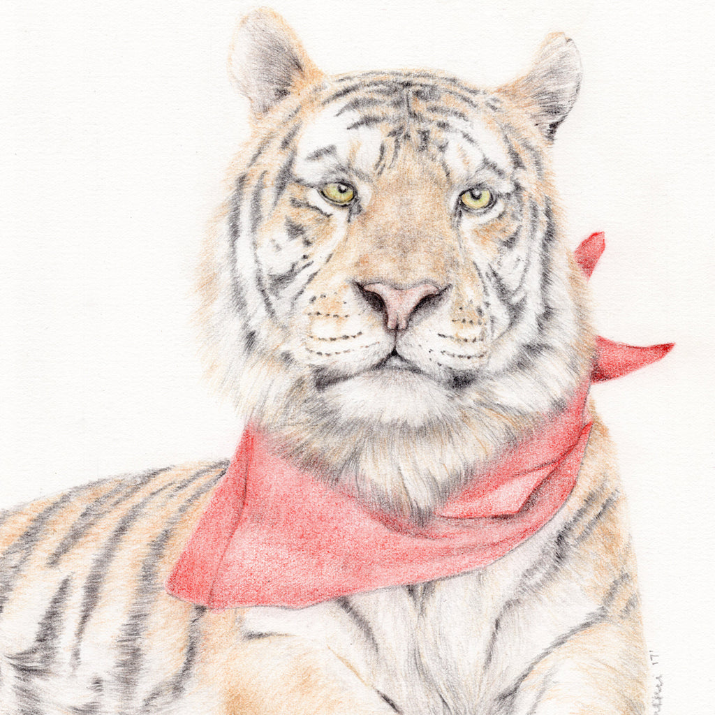 Tiger with Red Bandanna
