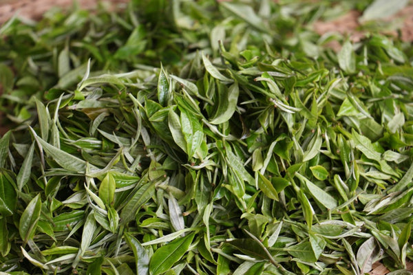 fresh 1 bud/1 leaf tea