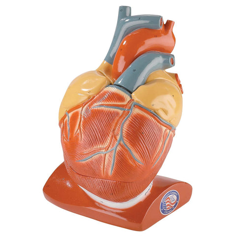 Giant Heart with pericardium closed