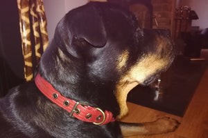 Custom Dog Collar - Elvis & Kresse