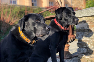 Fire-hose Pet Collars - Elvis & Kresse