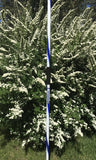 Training Javelin 300g / 400g / 500g / 700g Blue/White STEEL Tip