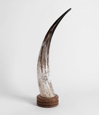 Ankole Horn Decorative Object - Round Base,  - Rose & Fitzgerald