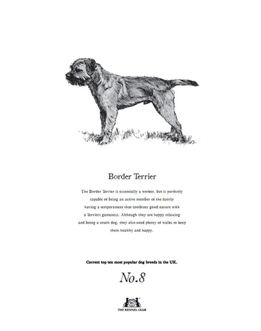 Border Terrier Tea Towel - Crufts and Kennel Club Gifts