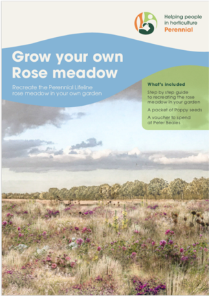 Perennial Grow your own Rose Meadow