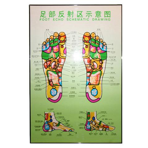 G-04A Foot Chart  / Foot Massage Poster