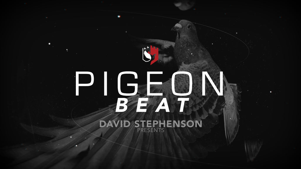 Announcing Pigeon Beat, a new show dedicated to pigeon stories