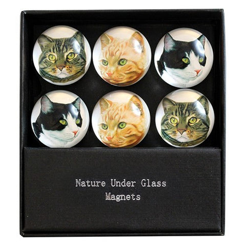 "CAT FACE DOME MAGNET 6PC/SET 1.375""Dia x .75""H"