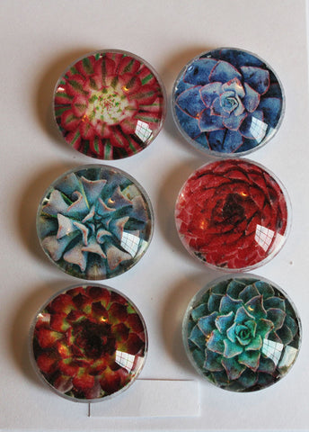 All Succulents Glass Gem Super Strong Magnets