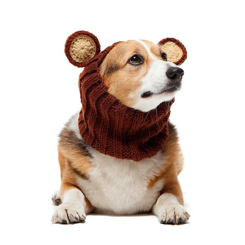 Dog Snood Costume Grizzly Teddy Bear Zoo Snood