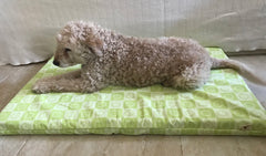 Organic Pet Beds For A Healthy Pet - 1.5 inch thick