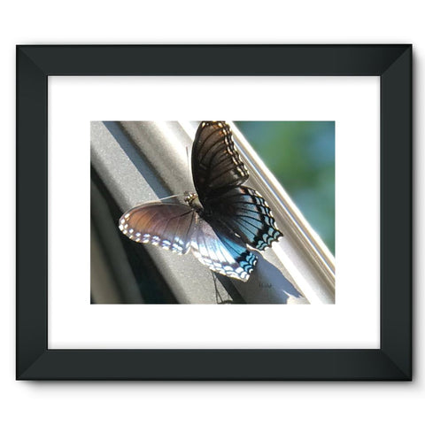Butter Fly Day - Canvas Wraps Framed Fine Art Print