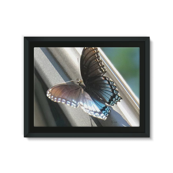 Butter Fly Day - Canvas Wraps Framed Eco-Canvas