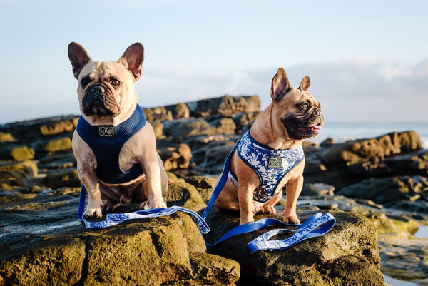 (15% OFF) REVERSIBLE DOG HARNESS: Freestyle
