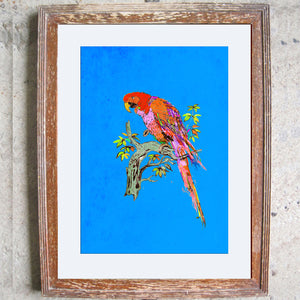 "Signed Print / ""The Proper Parrot"""