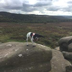 Dog Walk - National Trust Longshaw Estate