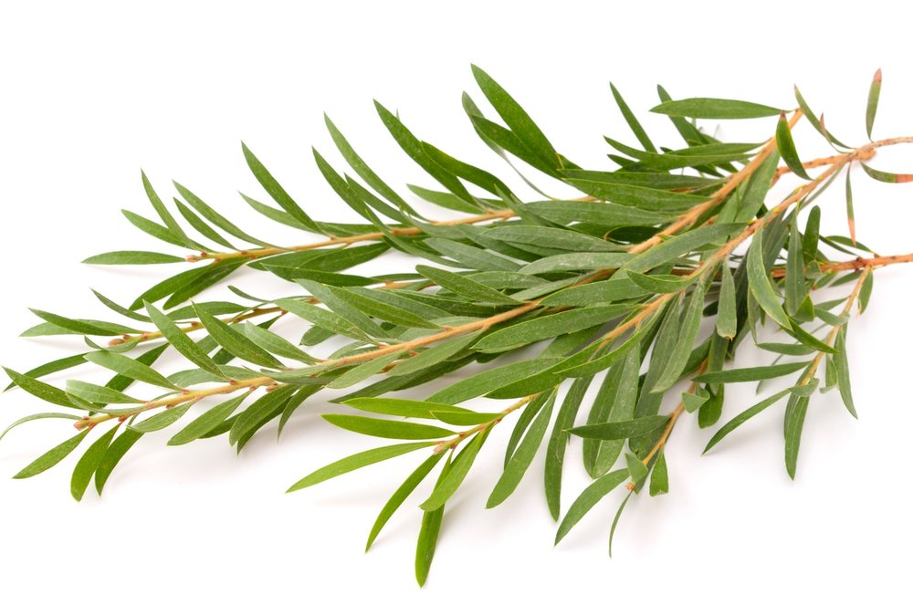 Five easy ways to use tea tree oil (Your skin will thank you)