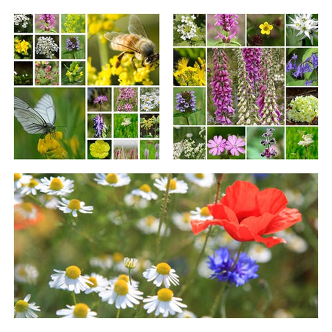 British Native Wildflower Seed Mixtures Collection - 3 Packets - RP Seeds