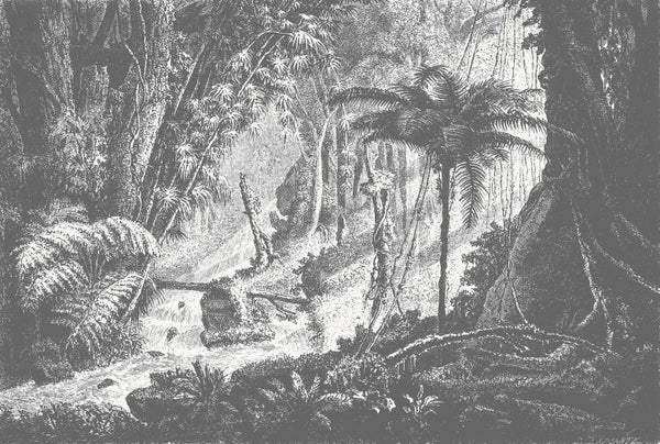 Amazonia Jungle Wall Mural - Monochrome