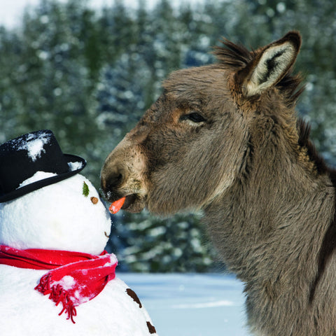 ARCHIVED - Donkey and his snowy friend