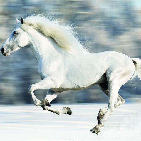 Galloping horse in snow