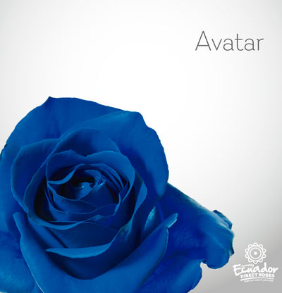 AVATAR - Blue Tinted Rose