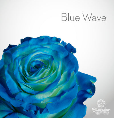 BLUE WAVE - Blue Tinted Rose