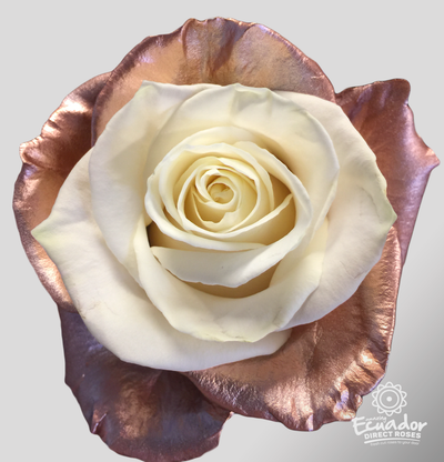GLAM EXPLOTION -Bicolor Tinted Rose