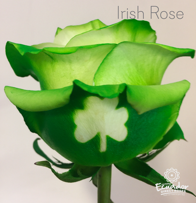 IRISH ROSE - Glitter Tinted Rose